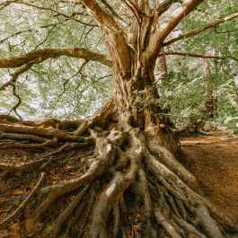 photo-of-old-tree-1792626